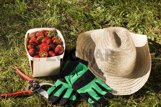 Stilleben im Garten mit Erdbeeren, still life in a garden with strawberries