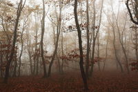 beautiful foggy forest in late autumn season