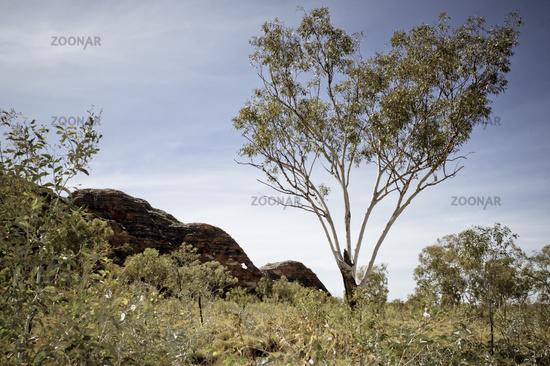 Elephant-Rock