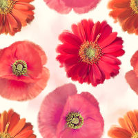 seamless   pattern of red flowers