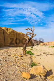 Curved dried tree
