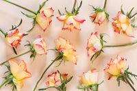 Zwölf Rosen auf Papier