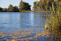 Jahreszeit Herbst Herbststimmung am See Treuer Nachbarsteich
