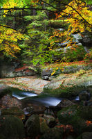 Small creek in autumn forest of Karkonosze Mountains