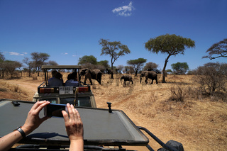 Handyfoto im Tarangire Nationalpark Tansania