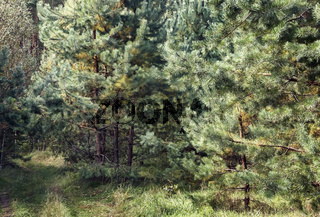 Forest landscape in the early autumn.