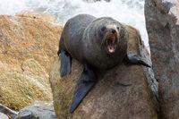 Narooma Seal Life