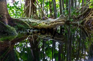Dschungel im Botanischen Garten