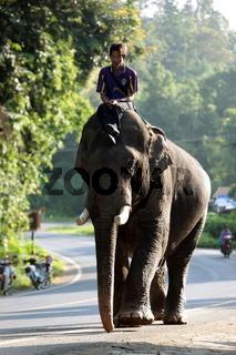 Ein Elefant bei Chiang Mai im Norden von Thailand.