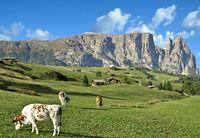 auf der Seiser Alm mit Blick auf den Schlern,Suedtirol,Italien