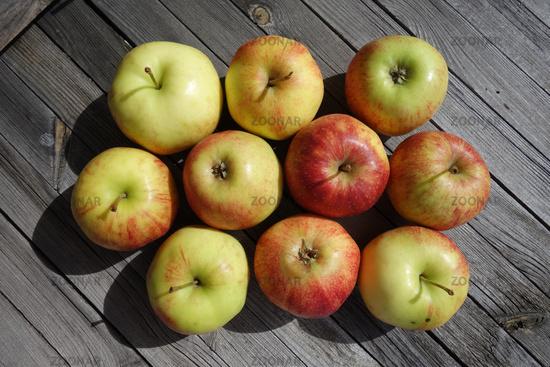 Malus domestica Jonagored, Apfel, apple