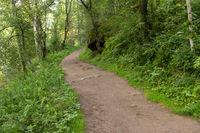 Terrenkur health trail along Belokurikha mountain river