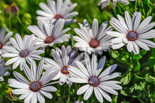Flowers with white petals