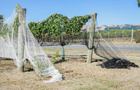 vineyard bird netting