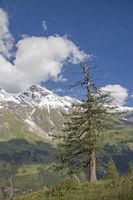 Wiesbachhorn mit Bergkiefer