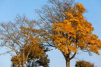 Stimmungsvolle Landschaft im Herbst Baumkrone