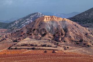 Vineyards. The Autumn Valley