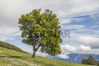 Landschaft  auf dem Monte Bondone