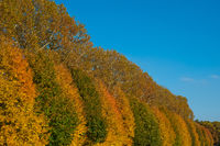 colorful trees and blue sky - autumn forest landscape