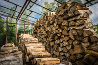Firewood stacked in huge piles in hothouse