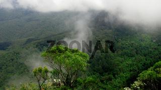 Australischer Regenwald