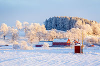 Farm in the countryside in a wintry landscape