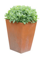 Garden Planter with succulent plant