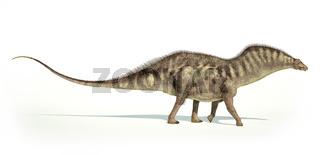 Photorealistic representation of an Amargasaurus dinosaur. Side view.