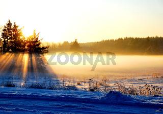 Waldnebel im Winter