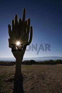 Kaktus bei Ruinen von Quilmes, Argentinien, Cactus at the ruins of Quilmes, Argentina