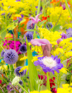 Flowerbed with various summer flowers