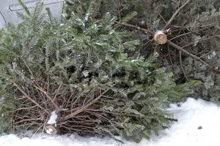 Weggeworfene Weihnachtsbaeume