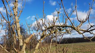 Das kahle Geäst eines Holunderbusches an einem sonnigen Wintertag