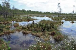 The wild nature-impassable a bog in the Siberian tundra