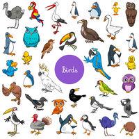 cartoon birds animal characters big set