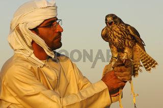 Jagdfalke sitzt auf der Hand des Falkners