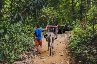man with horse transporting current generator through forest / jungle