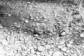 in oman  old river and  stone