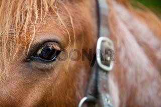 Pferdekopf Detailaufnahme