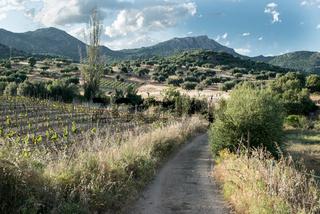 Olivenhaine und Weinfelder bei Dorgali, Sardinien
