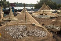 fish to dry in the sun in the small fishing village of India GOA