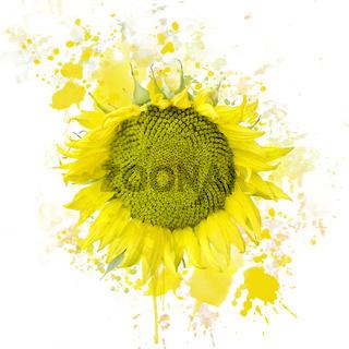 Sunflower Bloom Watercolor