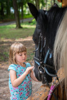 Cute little girl stroking  head of a black horse