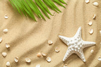 Summer Background with Green Palm Leaf, Starfish and Shells