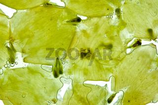 Weiße Weintrauben mit Saft