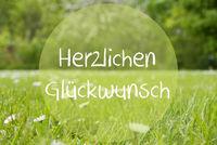 Gras Meadow, Daisy Flowers, Herzlichen Glueckwunsch Means Congratulations