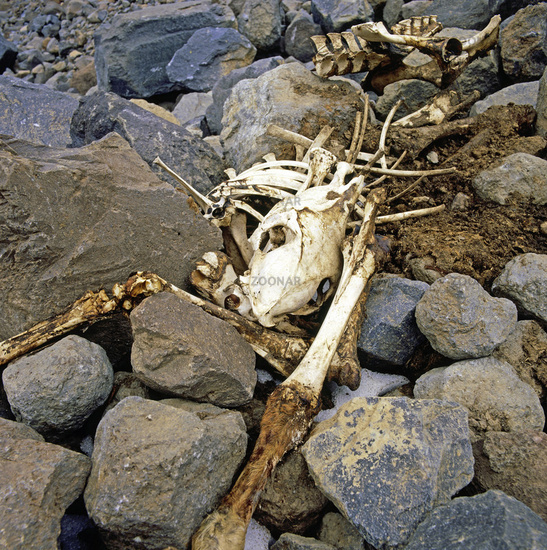 Skelett eines Lasttieres in Ost-Anatolien, Tuerkei