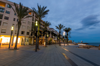 Palms on city famous promenade in Torrevieja, Spain