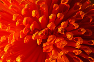 Orange flower closeup with lots of details