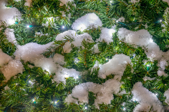 Spruce with snow and garland lights